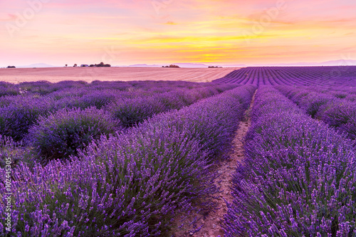 Poster Prune Beautiful landscape of lavender fields at sunset in Provence