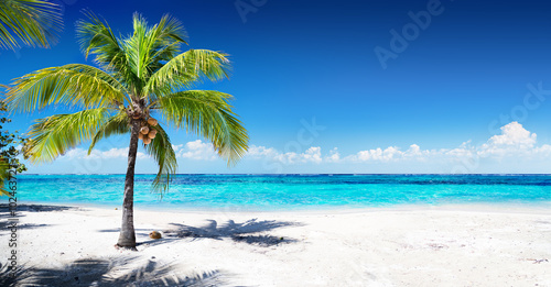 Fotobehang Bomen Scenic Coral Beach With Palm Tree