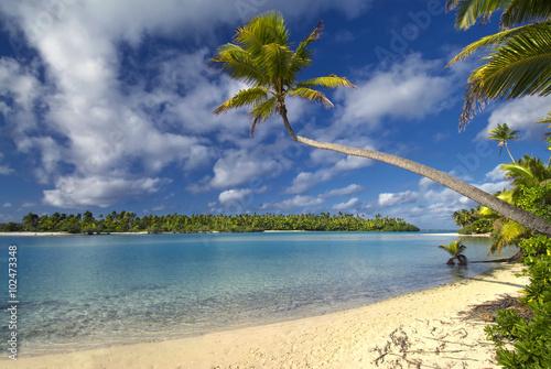 Fotografie, Obraz  Palm tree stretching over beach towards lagoon