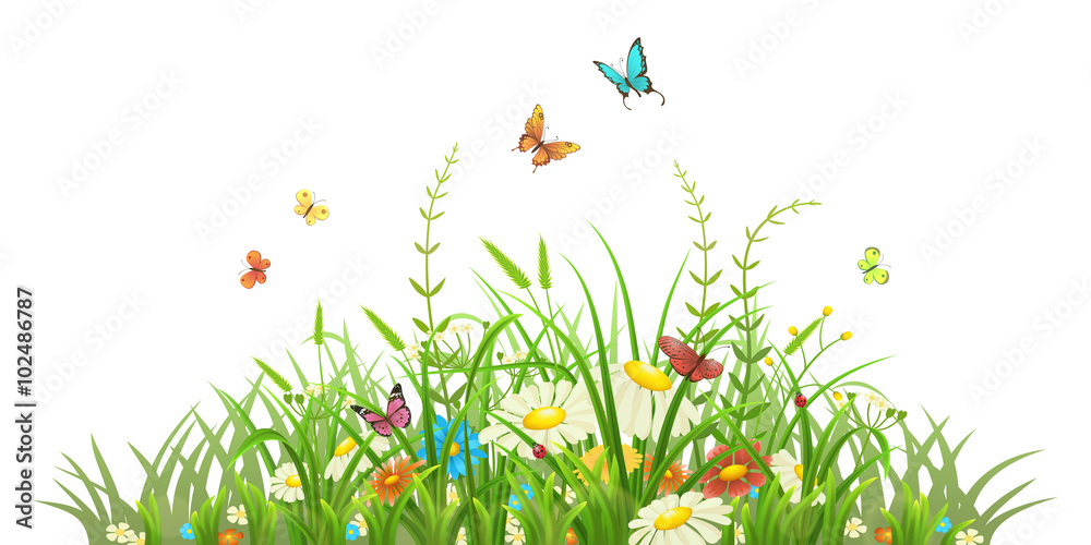 Fototapety, obrazy: Spring green grass with flowers and butterflies on white background