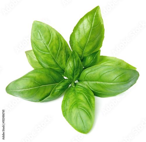 Leinwand Poster Fresh basil leaves