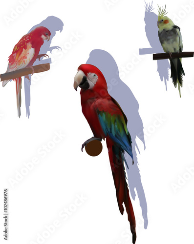 trzy-kolorowe-papugi-z-cieniami-na-bialym-tle