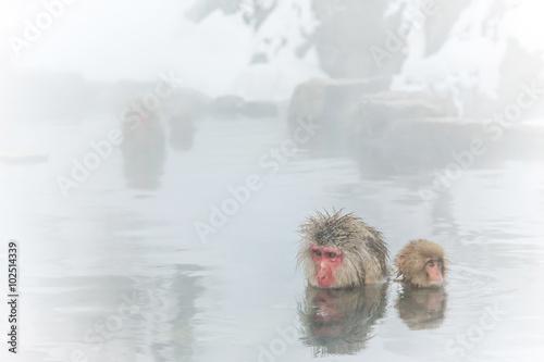Photo  温泉を楽しむおさるさん Japanese monkey enjoying a hot spring
