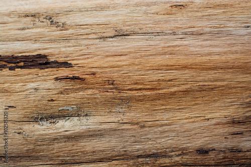 Fototapeta Tree bark texture obraz na płótnie