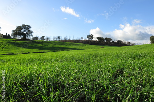 Fotografiet  paesaggio agricolo, campagna