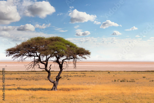 Wallpaper Mural Large Acacia tree in the open savanna plains Africa