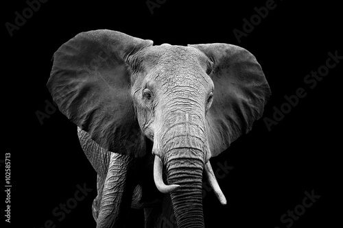 Deurstickers Olifant Elephant on dark background