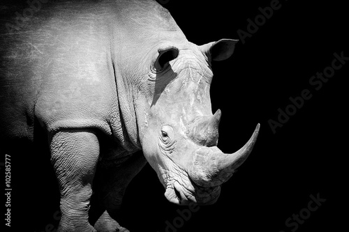 Tuinposter Neushoorn Rhino on dark background