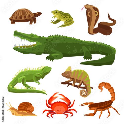 Reptiles And Amphibians Set Wall mural