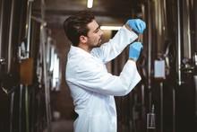 Focused Brewer Checking Beer