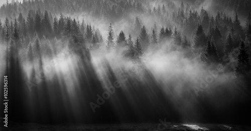 foresta avvolta da nebbia all'alba