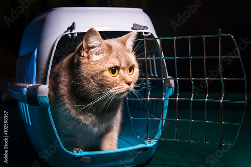 Obraz na płótnie Cat sits inside pet carrier