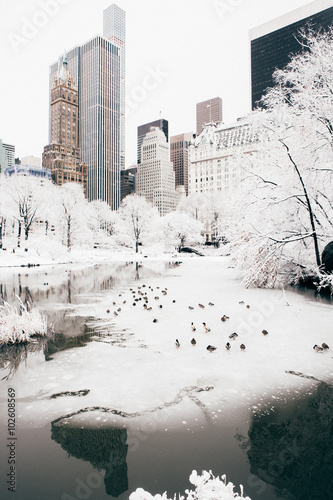 In de dag New York City Central Park after a Snow Storm, New York