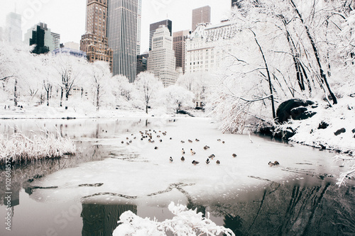 Foto op Canvas New York City Central Park after a Snow Storm, New York