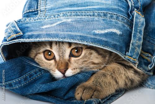 plakat Kätzchen in Jeans