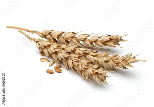 Canvas Print wheat ear isolated on white background cutout