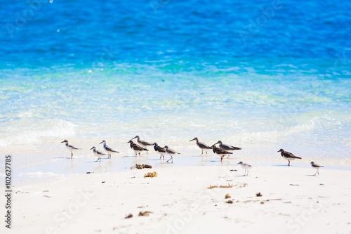 Fotomural  Sea bird tropics