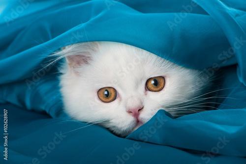 Weißes Kätzchen Fototapeta
