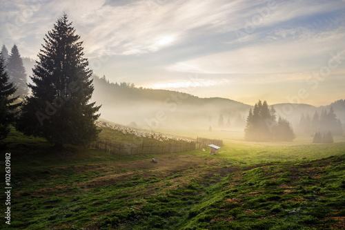 Foto auf Gartenposter Wald fir trees on hillside meadow in fog before sunrise