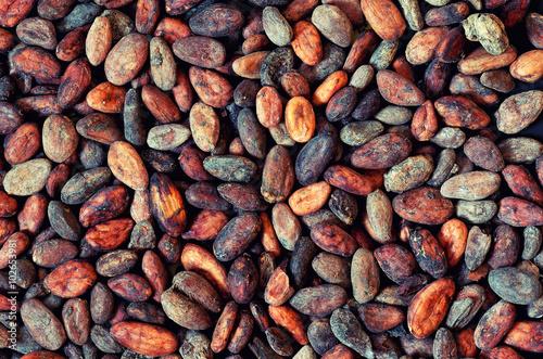 Fotografía  pattern of the cocoa bean