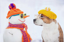 Dog With Glasses And Hat Looki...