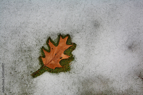 Plagát  Leaf surrounded by melting snow at dusk