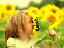 Little Girl Smelling A Sunflower