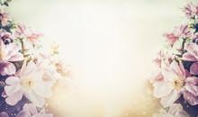 Lovely Floral Pastel Color Background, Banner