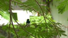 Asian Small Bird On Island Branches:Ultra HD 4K High Quality Footage Size (3840x2160)