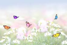 花畑に舞う蝶の群れ