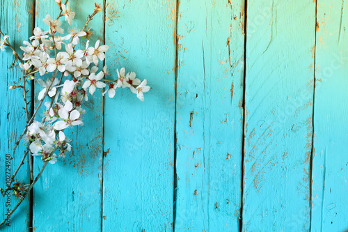 Fotografie, Obraz  image of spring white cherry blossoms tree on blue wooden table