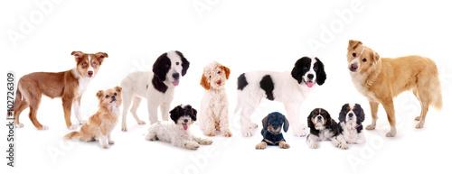 grupa-psow