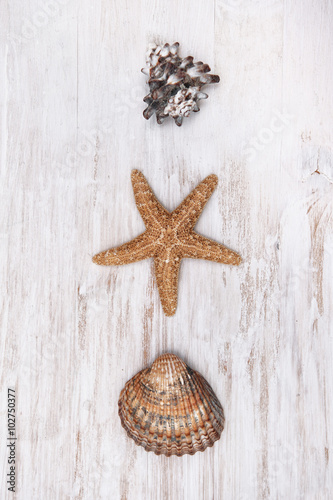 Foto-Tapete - Seashells on the old shabby chic wood background (von darkbird)