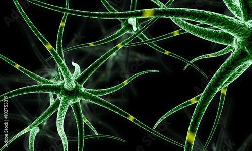 Fotografie, Obraz  Neuronas