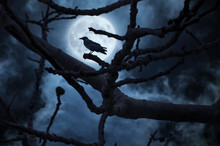 Black Raven On Branch At Night