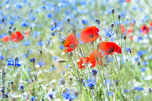 poppies and cornflowers - 102770337