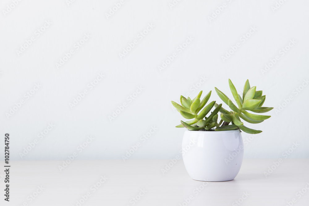Fototapety, obrazy: Indoor plant on wooden table and white wall