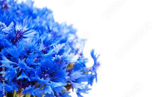 Photo Stands Floral woman blue cornflowers