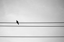 Silhouette Pigeon On Electric ...