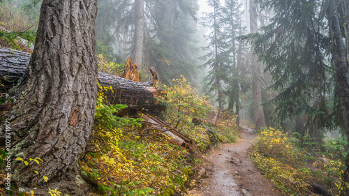 Trail in a dense forest among logs Wallpaper Mural