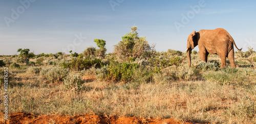 Staande foto Afrika Elephant in Tsavo East National Park, Kenya