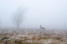 A Whitetail Deer Runs Through ...