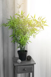 Small wooden table with green plant on curtain background