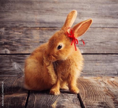 Stickers pour porte Pierre, Sable ed rabbit on wooden background