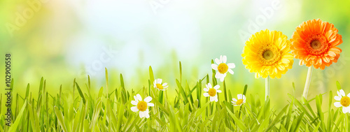 Colorful fresh panoramic spring banner