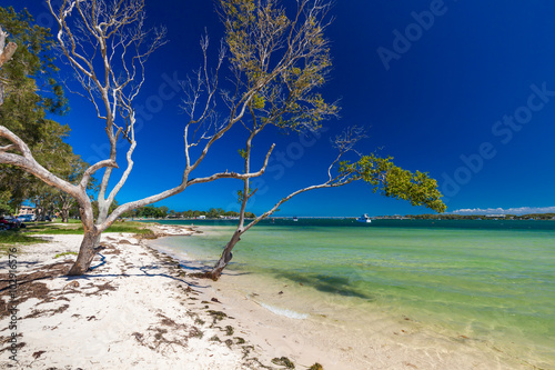 Poster Tropical plage BRIBIE ISLAND, AUS - FEB 14 2016: Beach with trees on the west s