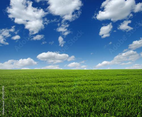 green field - 102921904