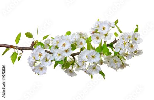 Fototapeta kwiaty na białym tle