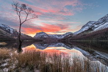 Dramatic Winter Sunrise At Buttermere In The English Lake District With Calm Reflections In Lake And Interesting Lone Tree.