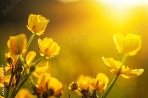 Photo  field of spring flowers